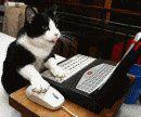 pisica online